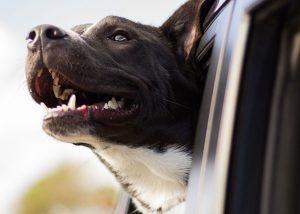 pet taxi service liverpool
