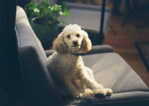 pop in pet service liverpool