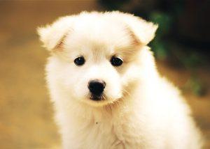 puppy sitting walking liverpool