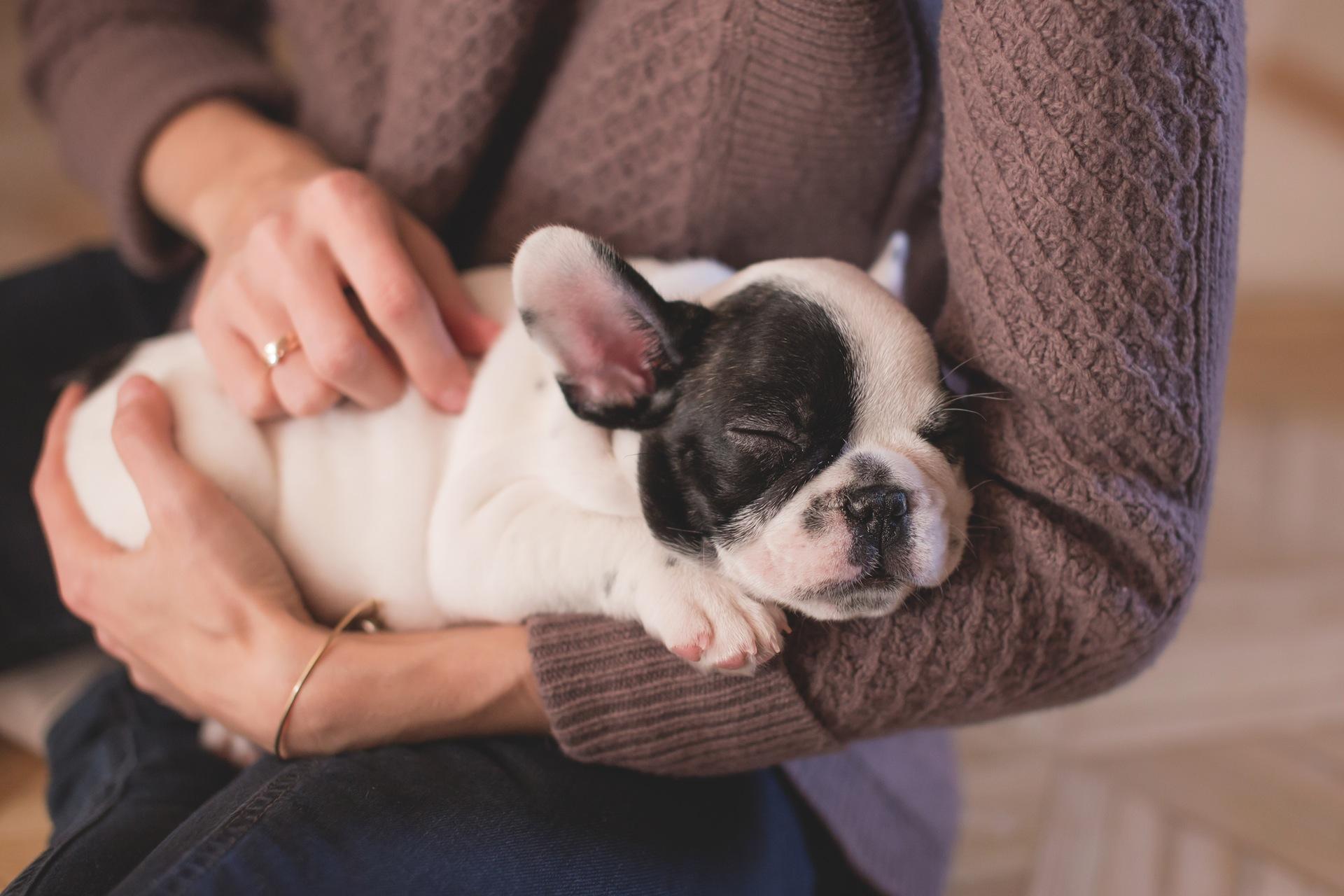 hiring pet sitters