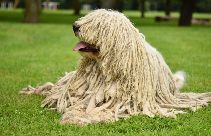 4 Long Haired Dog Breeds You Should Know About Sunnydays Pets