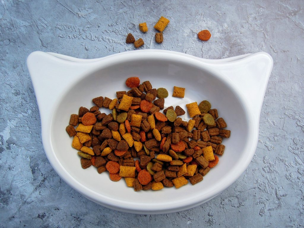 cat-balanced diet for cats