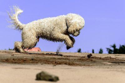 popular dog sports